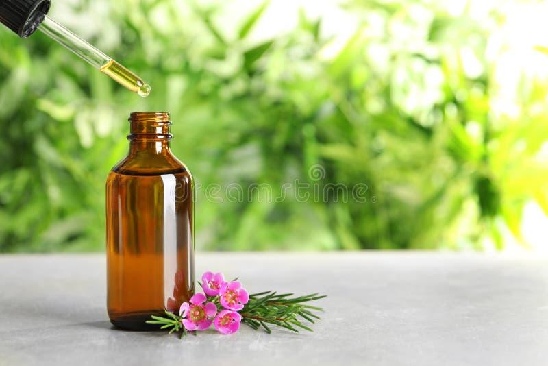 滴下的自然精油到在茶树枝附近的瓶里在桌上 免版税图库摄影