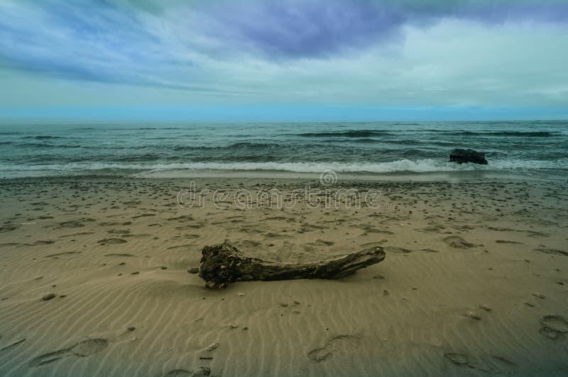 漂泊木头大片断在沙滩的 库存照片
