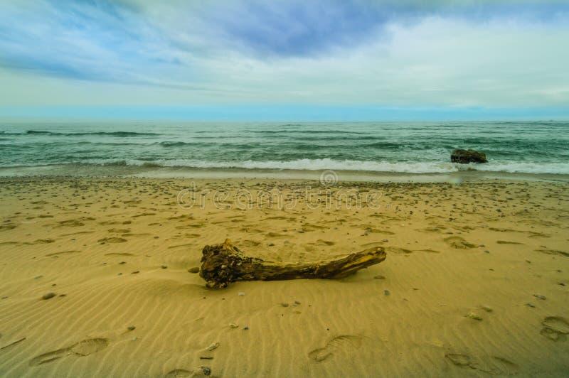 漂泊木头大片断在沙滩的 免版税库存图片