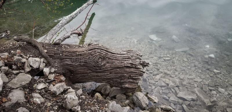 漂泊木头完整色彩纹理的日志 免版税库存图片