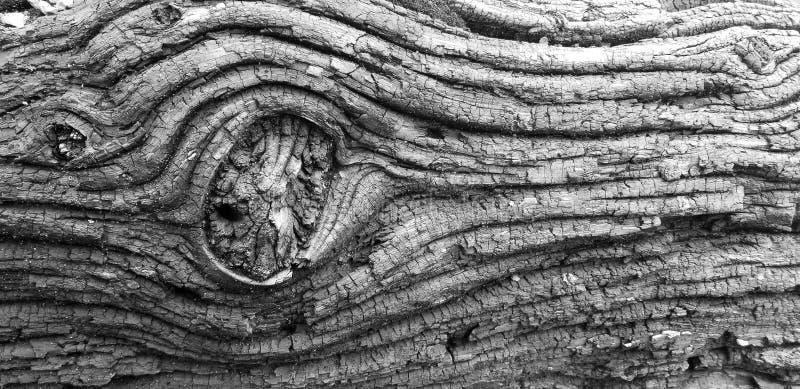 漂泊木头纹理日志黑白色 图库摄影