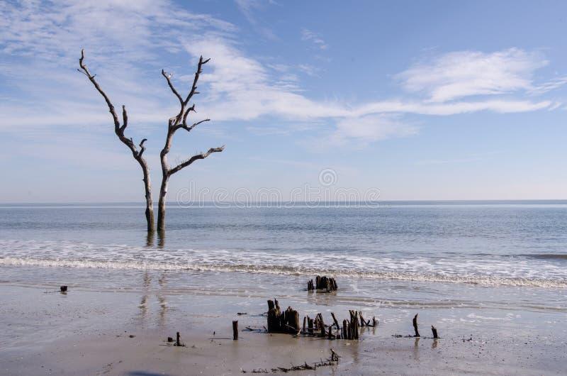 漂流木头和死的树在海滩在狩猎海岛国家停放 免版税图库摄影