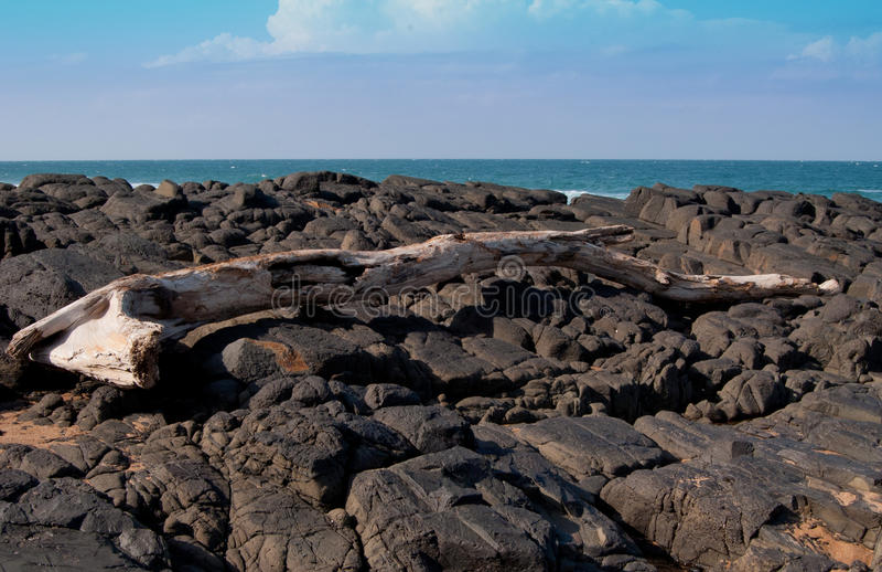 漂流木头岩石 库存照片