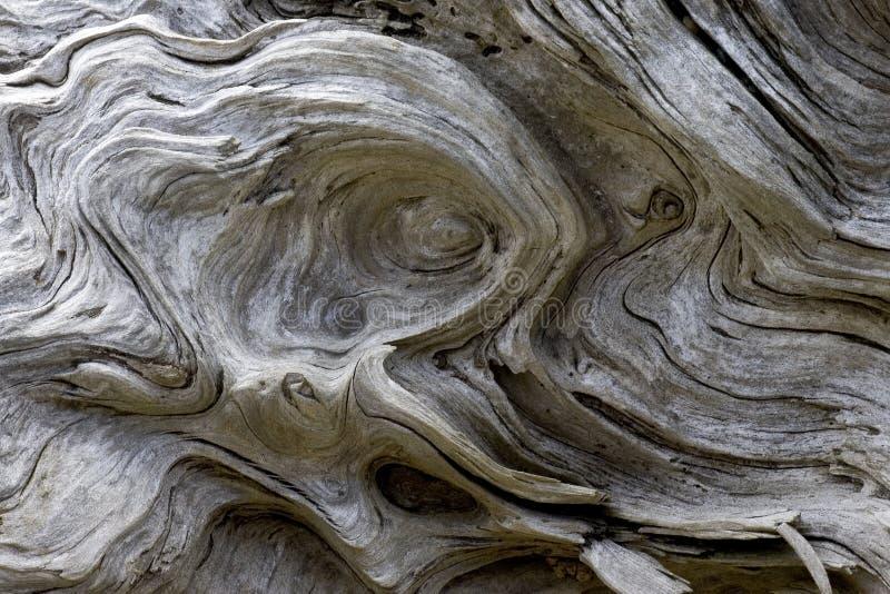 漂流木头模式 免版税库存照片