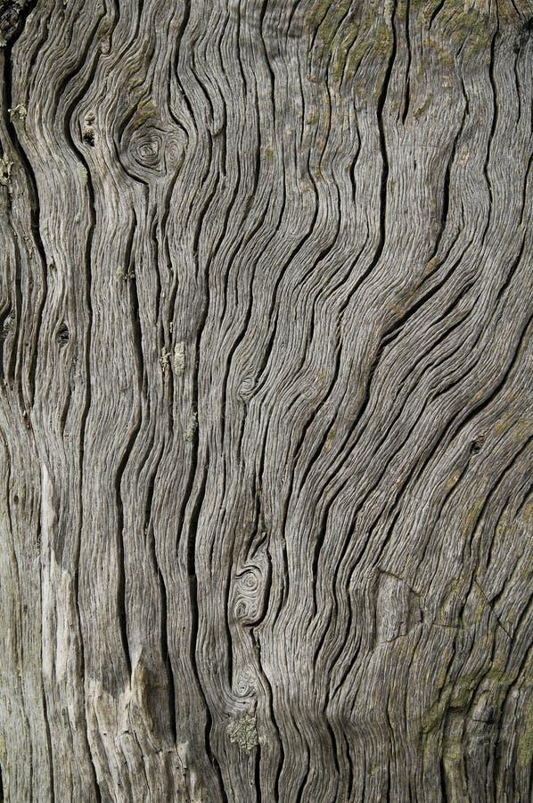 漂流木头谷物风化了 图库摄影