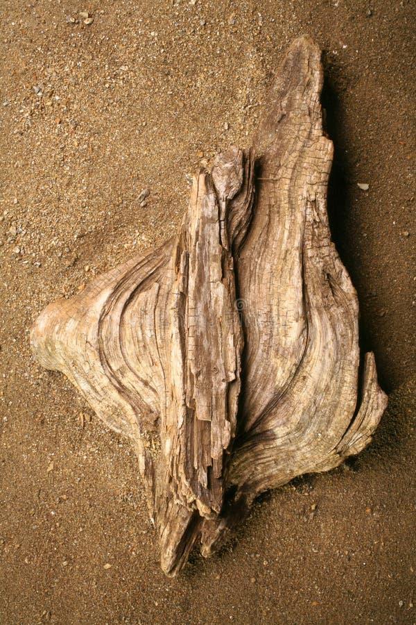 漂流木头 免版税库存照片