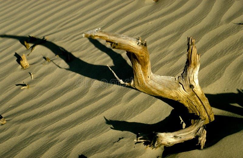 漂流木头 库存照片