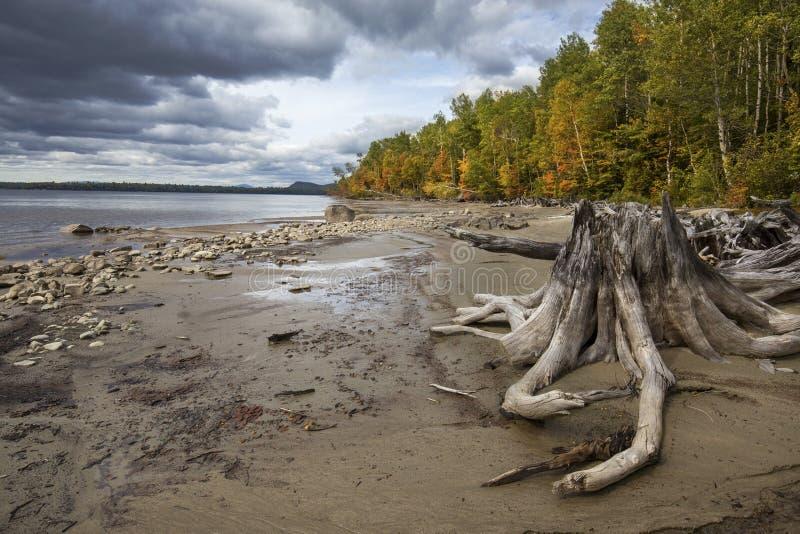 漂流木头、秋叶和黑暗的云彩在Flagstaff湖, Ma 免版税库存照片