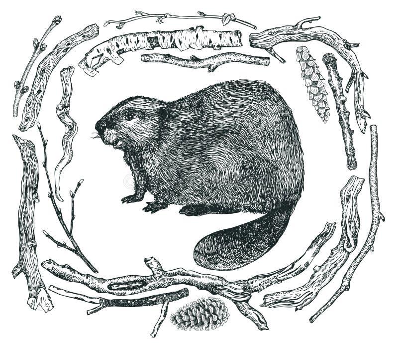漂流木头和海狸剪影样式手图画框架  向量例证