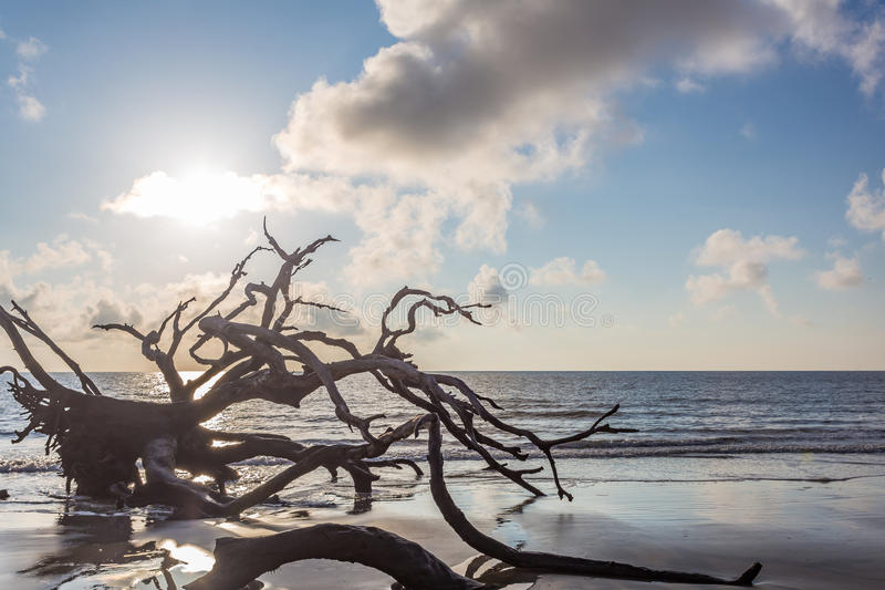 漂流木头海滩, Jekyll海岛乔治亚 免版税库存图片