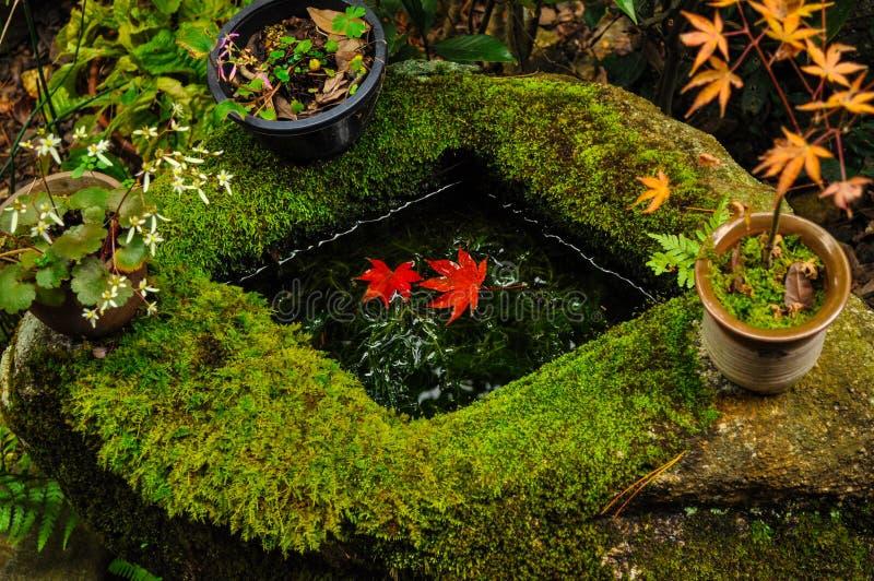 漂浮在一个石水池的水的红色叶子 库存图片