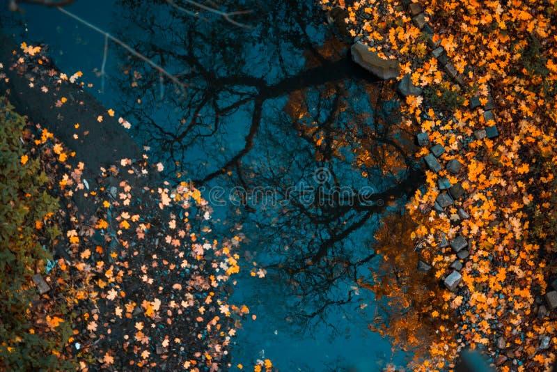 漂浮在与树的反射的黑暗的水中的五颜六色的叶子 免版税库存照片