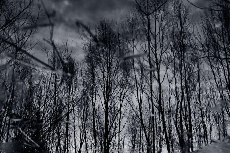 漂浮在与树的反射的黑暗的秋天水中的五颜六色的叶子。 图库摄影