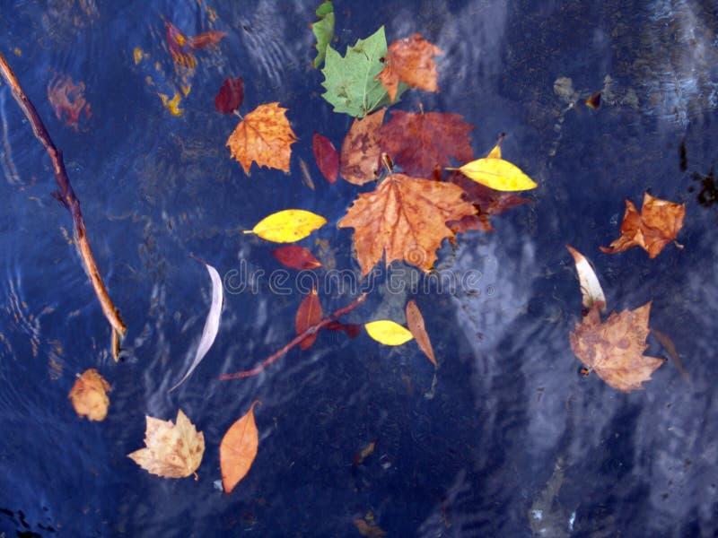 漂浮在水中的秋叶 图库摄影