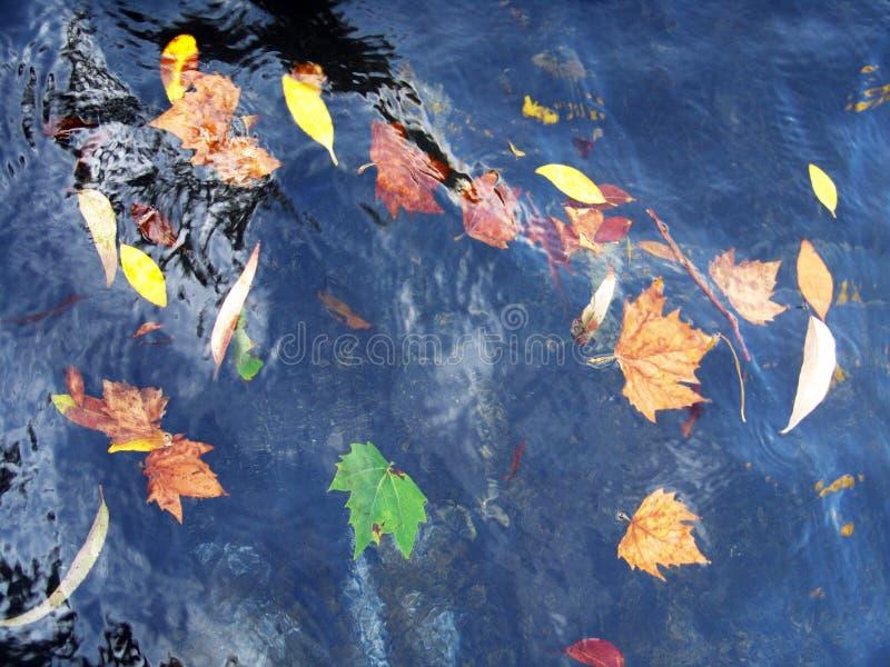漂浮在水中的秋叶 免版税库存照片