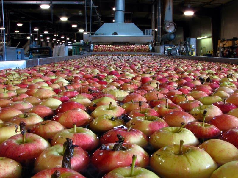 漂浮在水中的苹果在被洗涤的包装的仓库里 免版税库存照片
