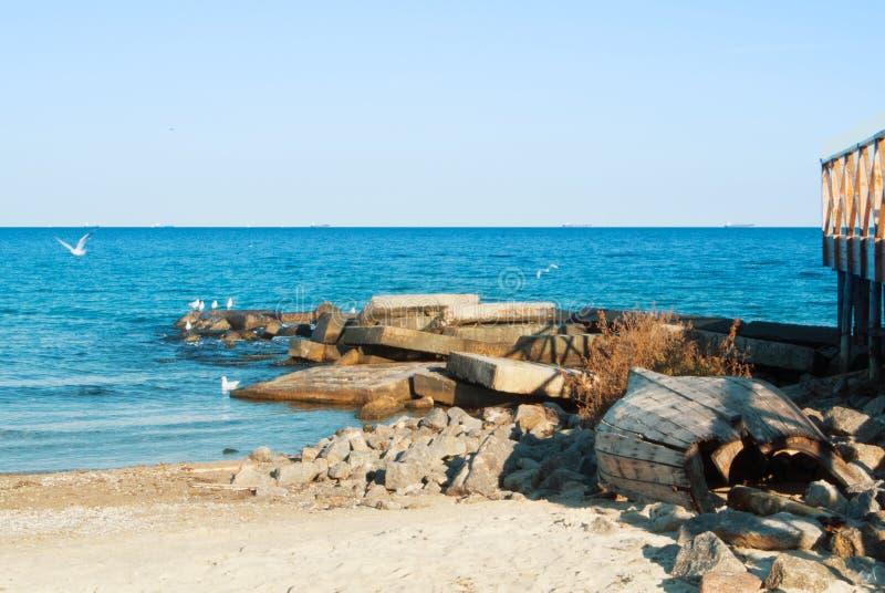 漂浮在海湖oce的蓝色透明波浪的海鸥 免版税库存图片