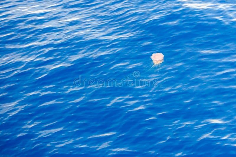 漂浮在海的表面的危险水母 库存图片