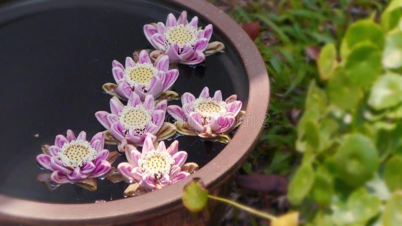 漂浮在碗的莲花 免版税库存照片