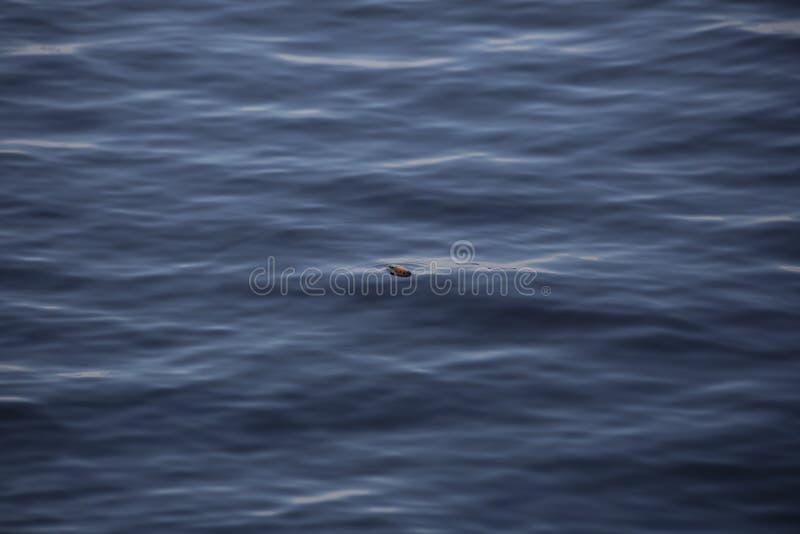 漂浮在水的渔浮子 免版税库存图片