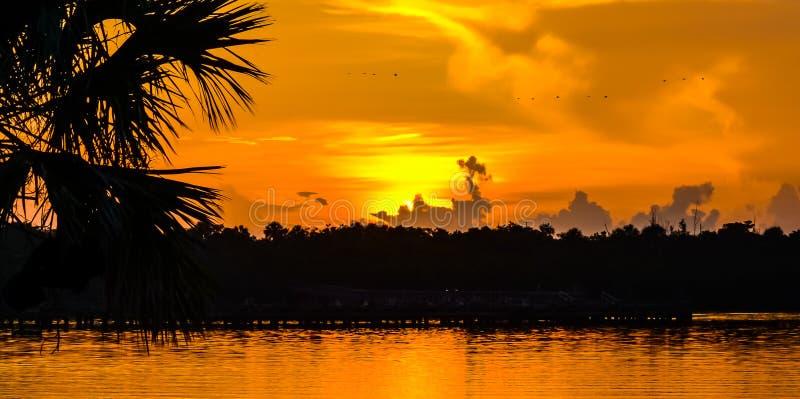 漂浮横跨金黄天空的鸟 免版税库存图片