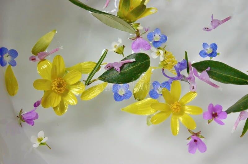 漂浮水表面上的五颜六色的花 免版税图库摄影