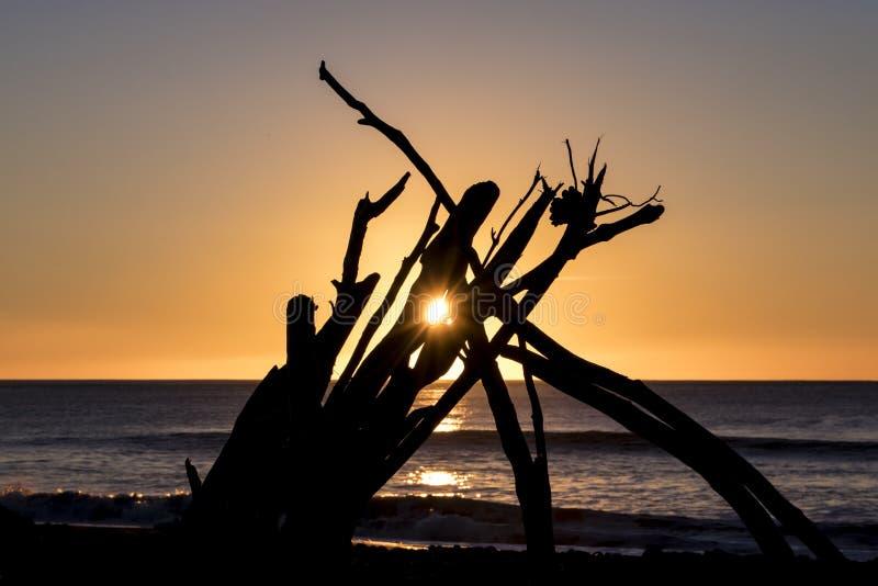 漂移与破裂通过中部的落日的木剪影 免版税库存图片