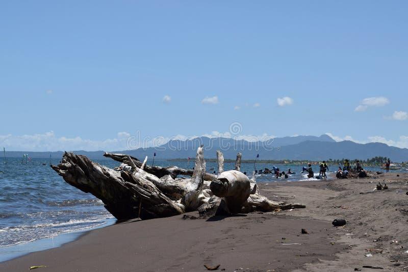 漂移木遮暗沐浴在海的观点的人 选择聚焦 图库摄影