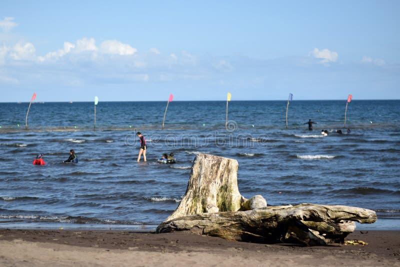 漂移木遮暗沐浴在海的观点的人 选择聚焦 免版税库存照片