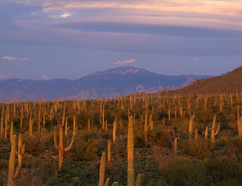 漂移完全成功在仙人掌鹪鹩足迹,巨人柱国家公园,亚利桑那的双突透镜的云彩 免版税图库摄影