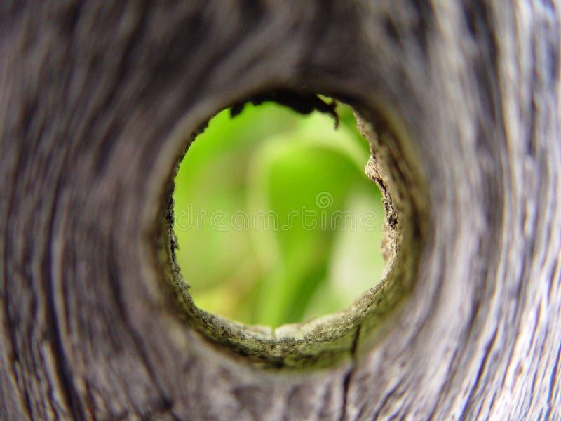 漏洞木头 免版税库存图片