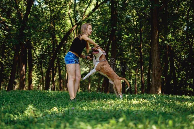 演奏与她的狗和棍子的女孩拔河 免版税库存图片