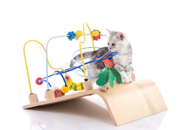 演奏木玩具的逗人喜爱的美国shorthair小猫 免版税库存图片