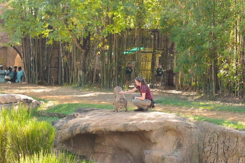 演奏猎豹的妇女教练员,在一个小组的眼睛前访客和雇员在布什加尔省 免版税图库摄影
