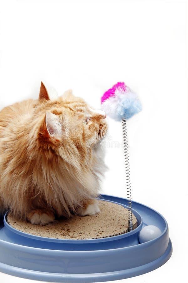 演奏玩具黄色的猫 免版税库存照片