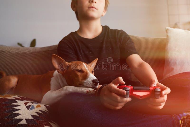 演奏电子游戏控制台的小逗人喜爱的男孩在家供以座位在有basenji狗小狗关闭的一个沙发在客厅 库存图片