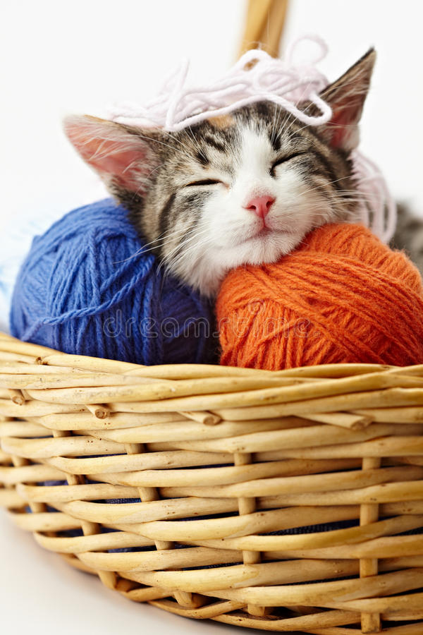 演奏纱线的猫 库存图片