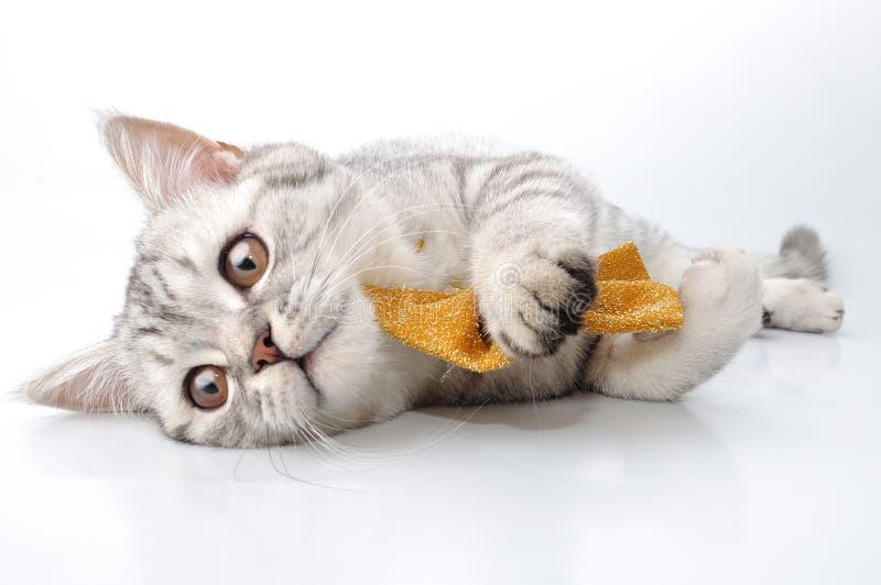 演奏银的猫 免版税图库摄影