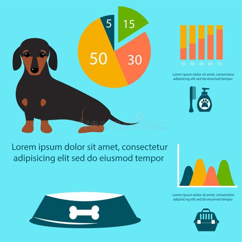 演奏infographic传染媒介元素集平的样式标志小狗家畜例证的达克斯猎犬狗 皇族释放例证