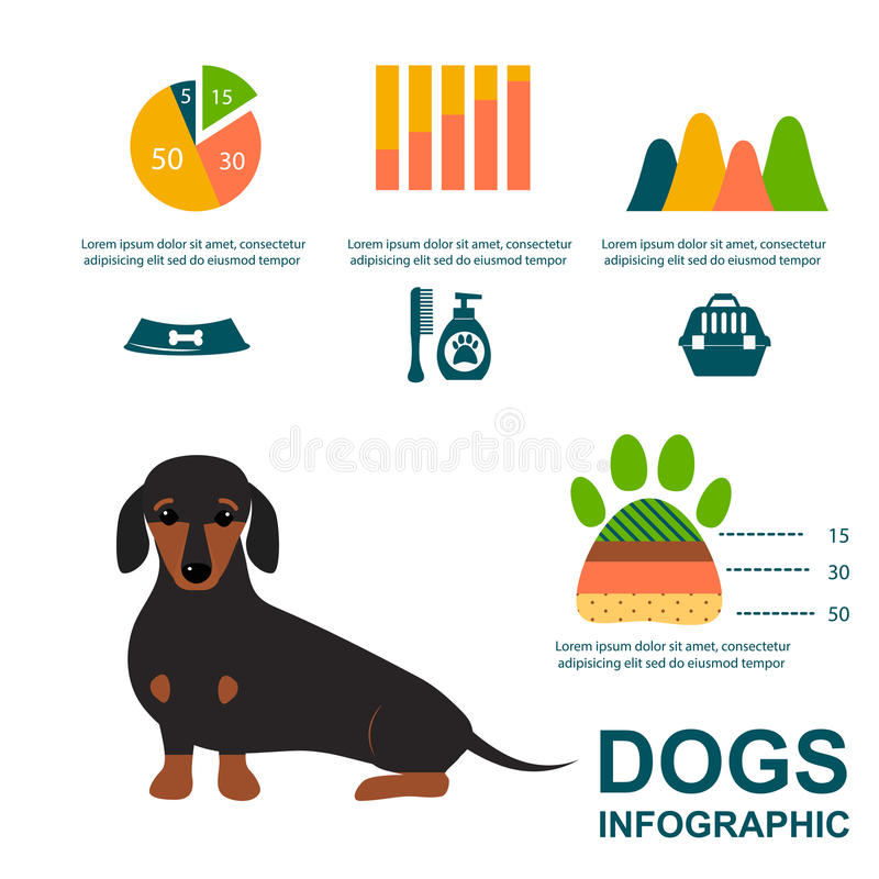 演奏infographic传染媒介元素集平的样式标志小狗家畜例证的达克斯猎犬狗 向量例证