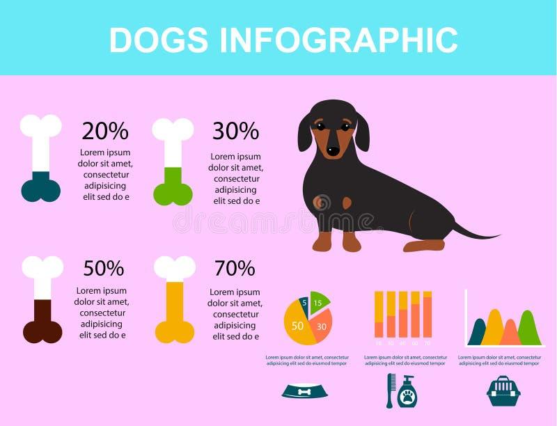 演奏infographic传染媒介元素集平的样式标志小狗家畜例证的达克斯猎犬狗 库存例证