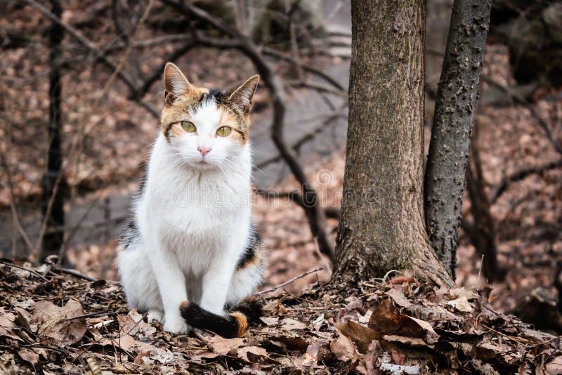 漫步在中央公园,纽约的三种颜色猫 库存图片
