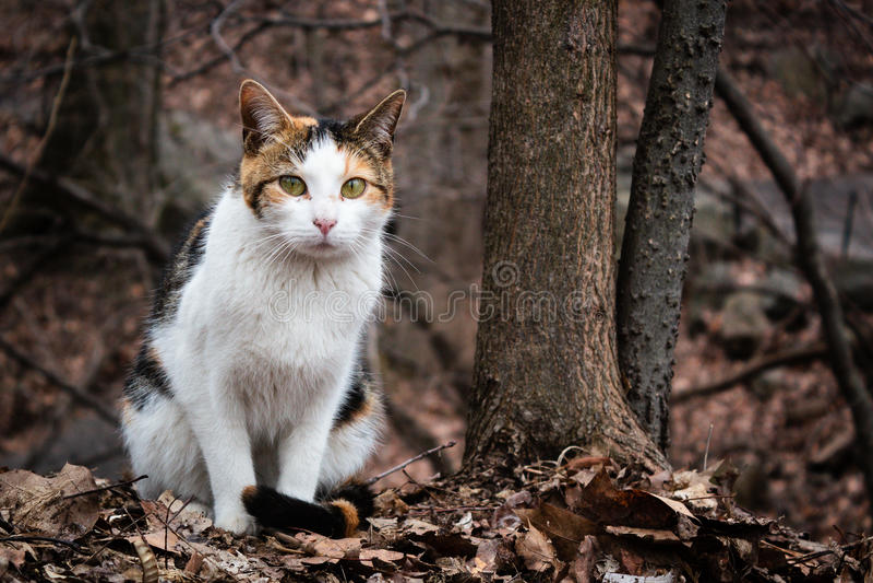 漫步在中央公园,纽约的三种颜色猫 免版税库存照片