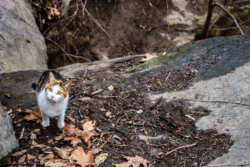 漫步在中央公园,纽约的三种颜色猫 图库摄影
