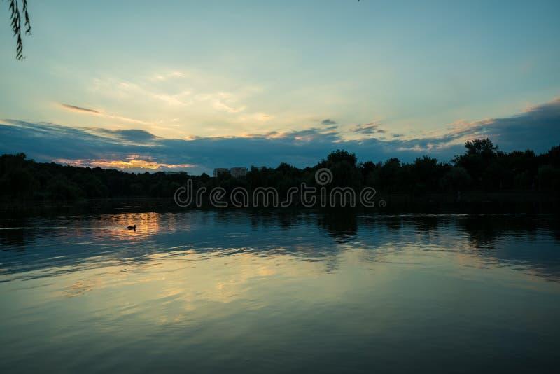 漫步在湖的鸭子在黄昏黎明 免版税库存图片