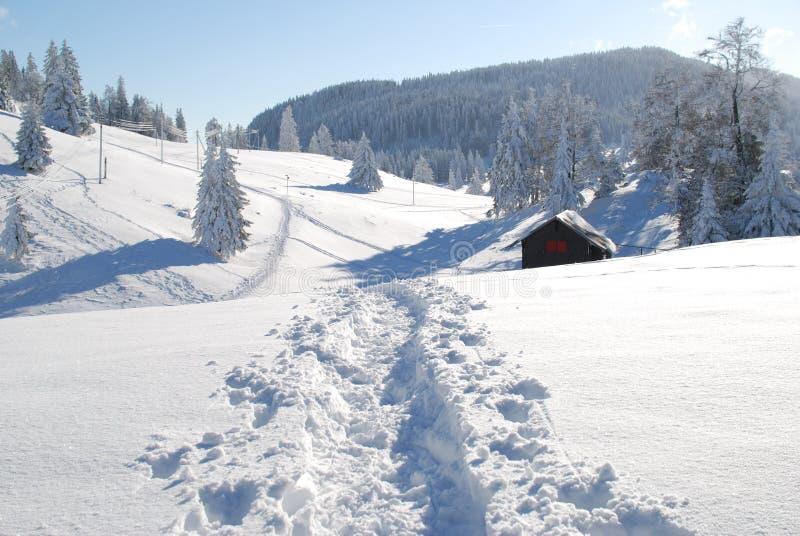 漫步的冬天 免版税图库摄影