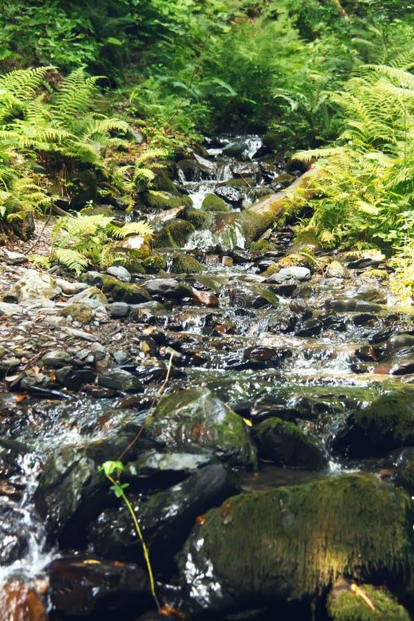 漫过生苔石头的山小河在夏天森林罗莎Khutor高山手段 Estosadok,索契,俄罗斯 图库摄影