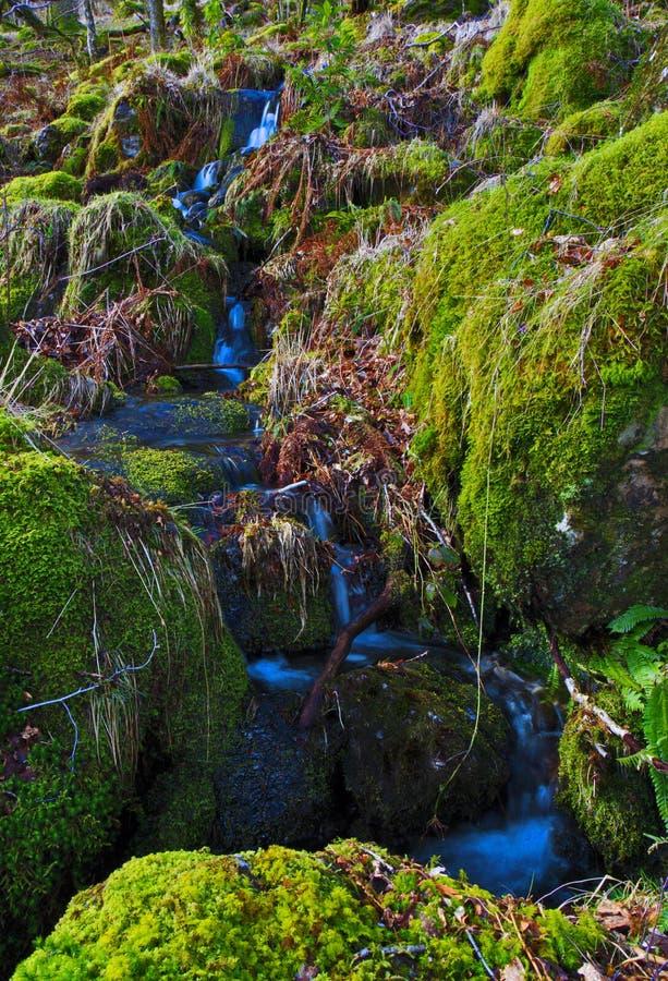 漫过青苔的水小细流由沃特金斯道路,斯诺登山浸泡了岩石 免版税图库摄影