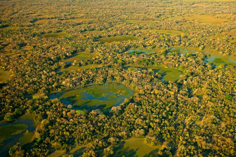 潘塔纳尔湿地风景、绿色湖和小池塘有树的 在热带森林,潘塔纳尔湿地,巴西的鸟瞰图 野生生物自然, tropi 免版税图库摄影