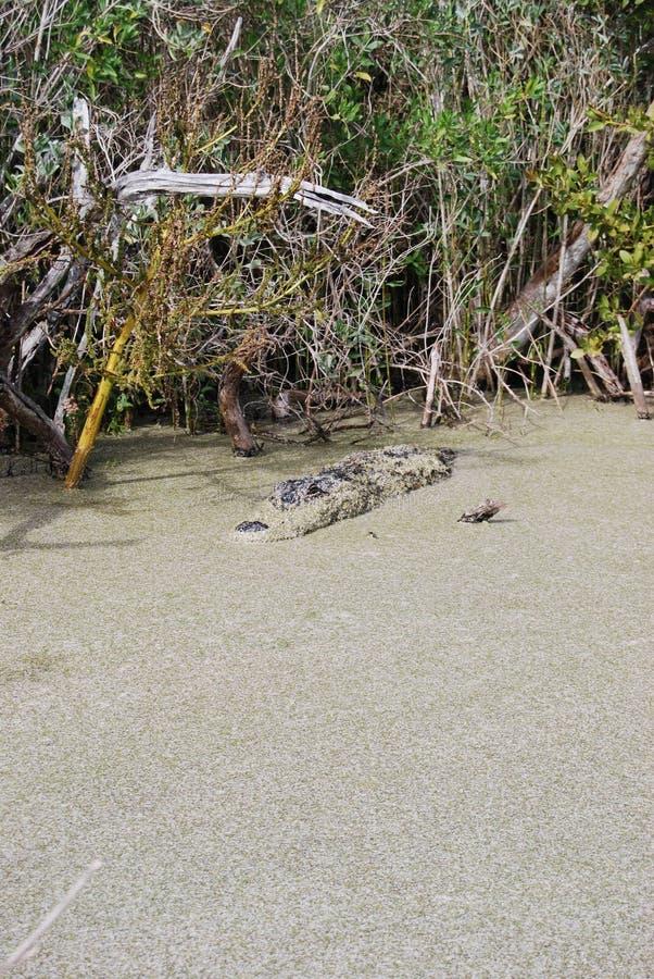 潜伏的沼泽